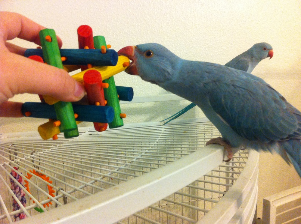 THE SAFE BIRDY GAME