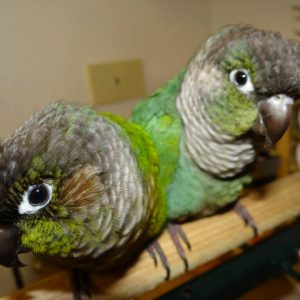 10 Tips for Avoiding Parrot Scams