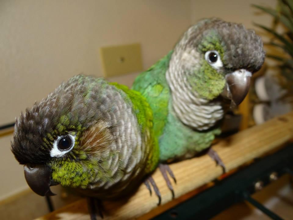10 Tips for Avoiding Parrot Scams
