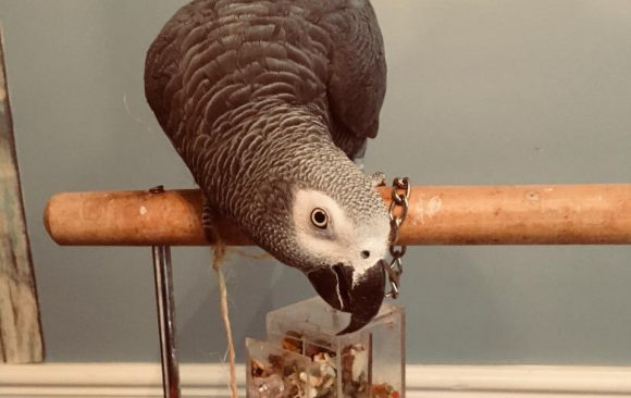 Quick Start Guide to Parrot Nutrition